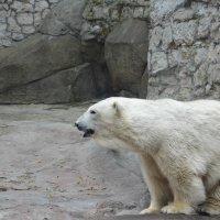 Зоопарк Москва. :: Лариса *