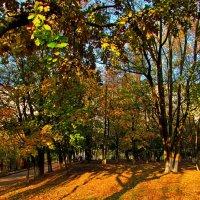 графика осеннего парка :: Александр Корчемный