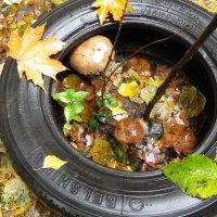 Кругом растут грибы :: Святец Вячеслав
