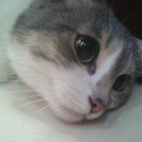 Котейка моя* :: Valeriya Voice