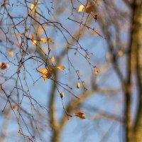 последние листочки осени 2014 :: Tatsiana Latushko