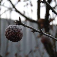 вот и зима наступила :: Ирина Пономарева