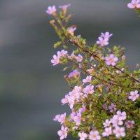 городские цветы :: Олег Лукьянов