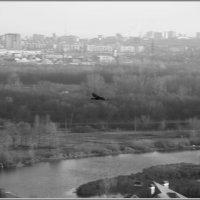 С высоты птичьего полёта :: Арсений Корицкий