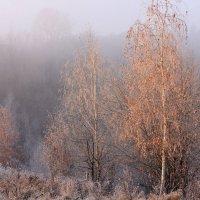 Поздняя осень. Туманный  вечер :: Ната Волга
