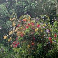 В Лоро Парке на Тенерифе :: Елена Смолова