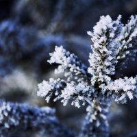 Краски зимы :: Julija Dorogova