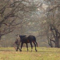 С конем :: Алена и Денис Щитовы