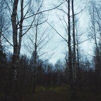 Лес :: Александр Болотов