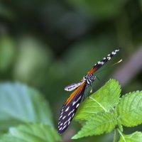 В джунглях Индии... :: Александр Вивчарик