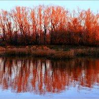 Осени закат... :: Евгений Юрков