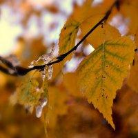 О листьях поздней осени.... :: galina tihonova