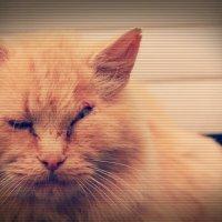 не сильно фотогеничный кот :: Оксана Закусилова