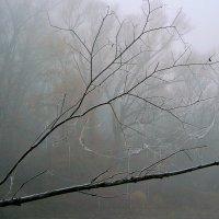 Осени туман :: Евгений Юрков