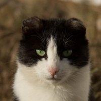 портрет кота :: Ирина Гракова
