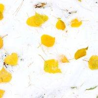 Снег в начале октября :: Полина Королева