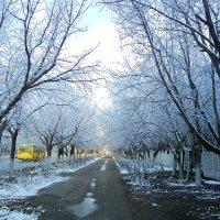 161. Первый снег :: Александр