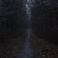 Кінець осені :: Дмитрий Гончаренко