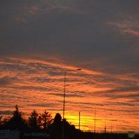 Пылает закат. :: zoja