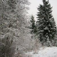 Начало зимы :: Виктор Елисеев