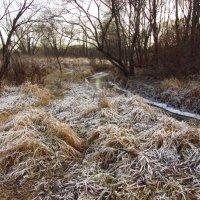 IMG_5765 - Ну, очень поздняя осень! :: Андрей Лукьянов