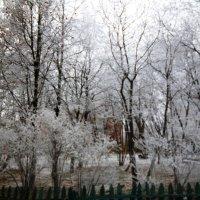 Снежок :: Mary Коллар