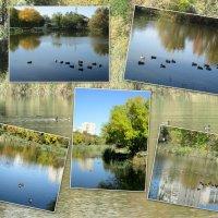 Городской пруд с дикими утками... :: Тамара (st.tamara)