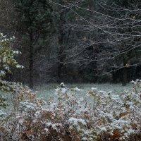 Наступление зимы :: Евгения Кирильченко