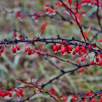 Осень.Дождь! :: Дмитрий Фадин