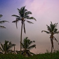 Пальмы на закате :: Татьяна Губина