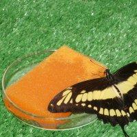 выставка бабочек :: Ленор Ленорова)))