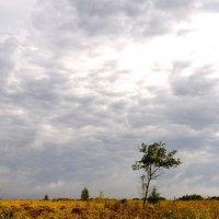 Один в поле :: Александр Павленко