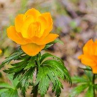 Цветок для дюймовочки :: юрий Амосов