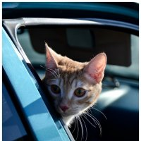 Кот путешественник :: Irina Schneider