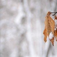 Вот и все, зима... :: Андрей Галушин