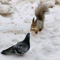 Ну ты уже достал меня! :: Пётр Сесекин