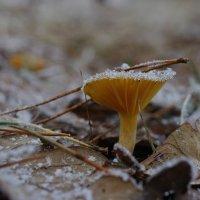 Робкие зимы шаги... :: НАТАЛЬЯ КАМАЙКИНА