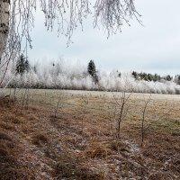 Осенне-зимняя... :: Александр Никитинский
