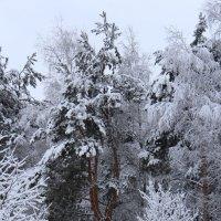 зимняя :: Данил Крижановский