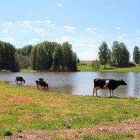 Пейзаж с коровами :: Галина Galina