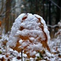 под снежной шапкой :: юрий иванов