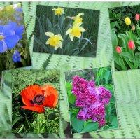 Весенние цветы... :: Тамара (st.tamara)