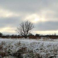 ...стоял ноябрь у двора... :: Мария Климова