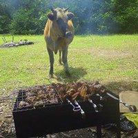 Как вкусно пахнет! :: Tata Wolf