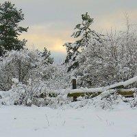 Я по первому снегу бреду....... :: Павлова Татьяна Павлова