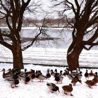 По первому снежку :: Владимир Болдырев