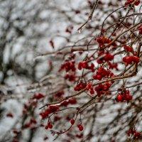 зима пришла :: Ксения Баркалова