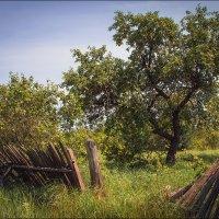 Заброшенный сад :: Елена Ерошевич