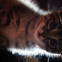 Котик :: Мария Данилова