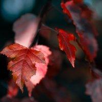 Осень... :: Den SkyWet